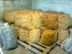 Bio brambory rozára