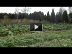 video - BIO kapusta od Zdravíčka