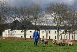 mnichové chovají i ovce.jpg
